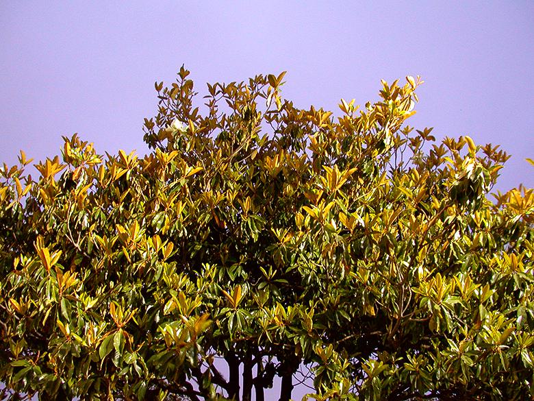 7-11 Lit Treetop