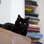 Biggie's on a Box